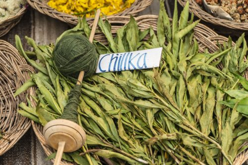 Natural dyeing with Peruvian ch'illka gives a vibrant green