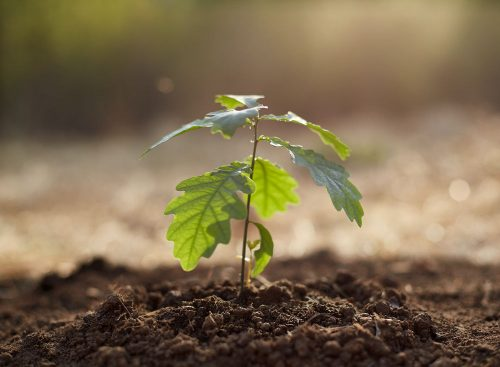 Sustainable haberdashers may have initatives such as planting trees for each order