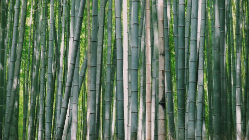 Organic bamboo is a great fibre to use when making summer or athletic clothing